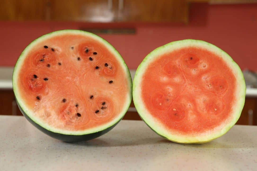 Densuke-Watermelons-most-expensive-food-item